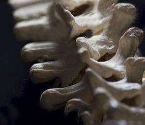 chiropractic snohomish wa